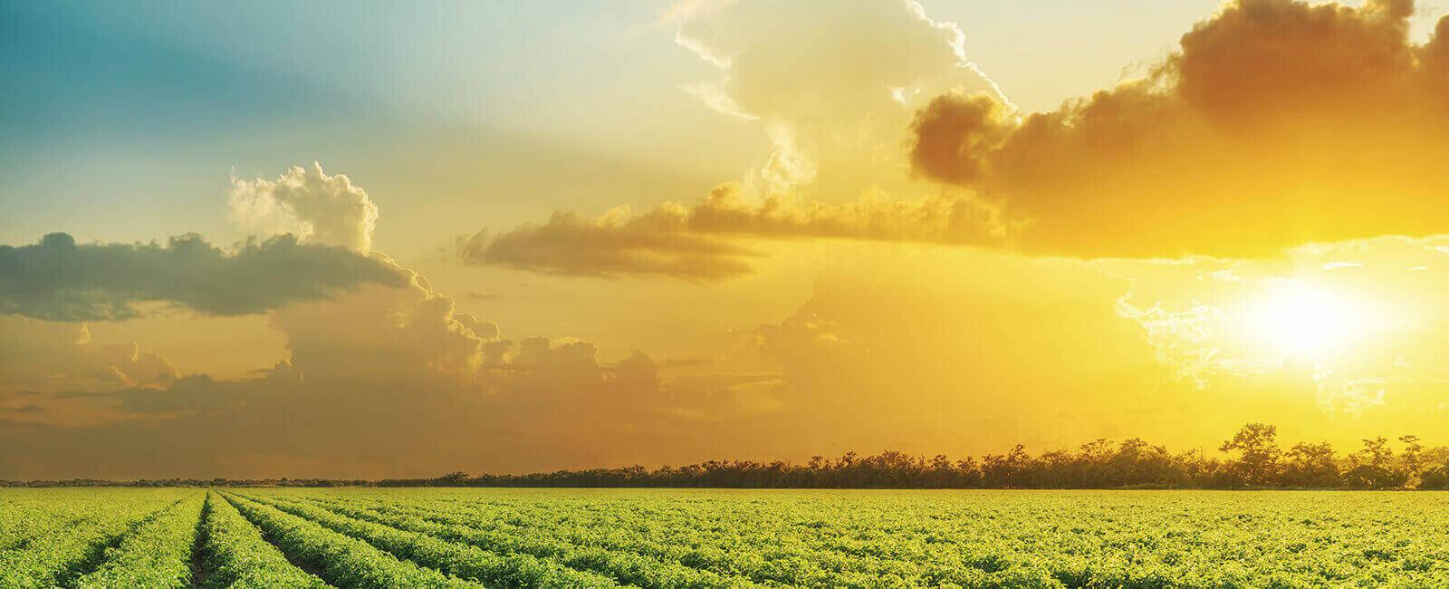 Sunrise over farm field